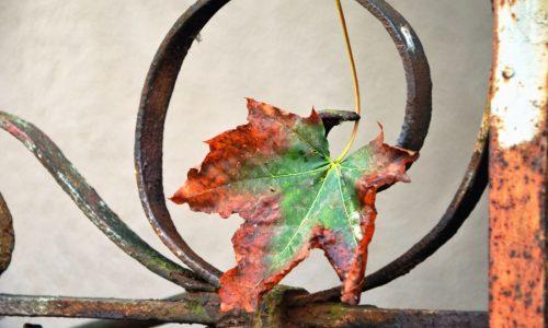 Herfst: gebrek aan energie en de griep. Hoe komt dat toch en wat doe je ertegen?
