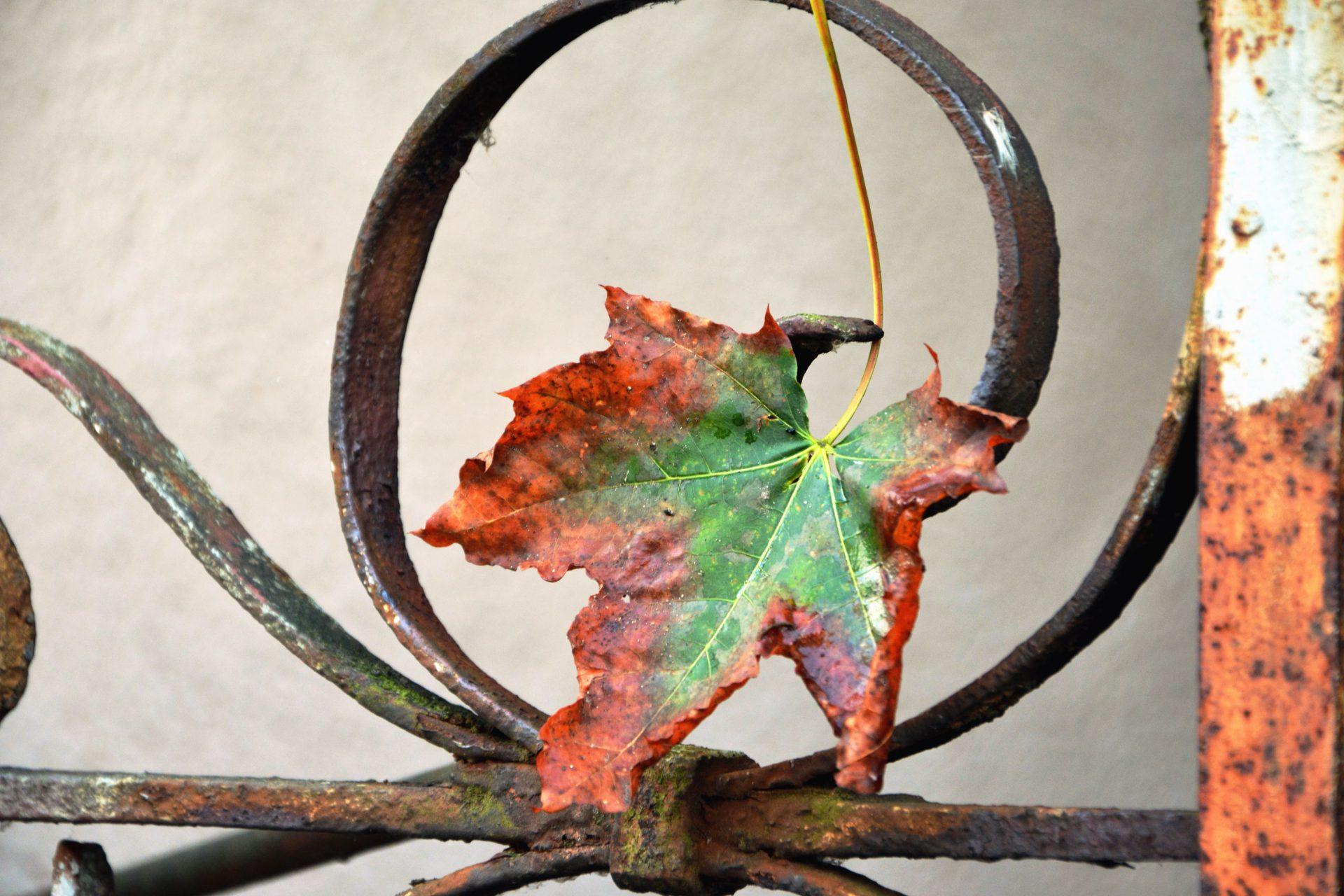 Herfst, verkoudheid, griep, weinig energie. Wat doe je er tegen?